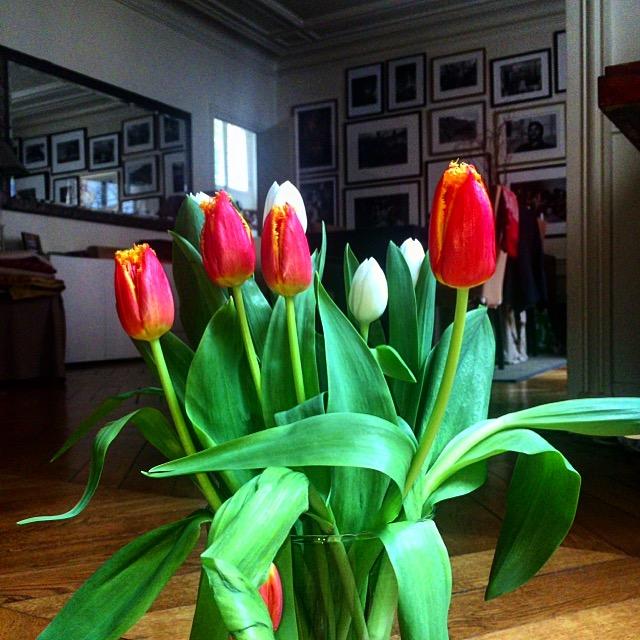 Tulipes orangées