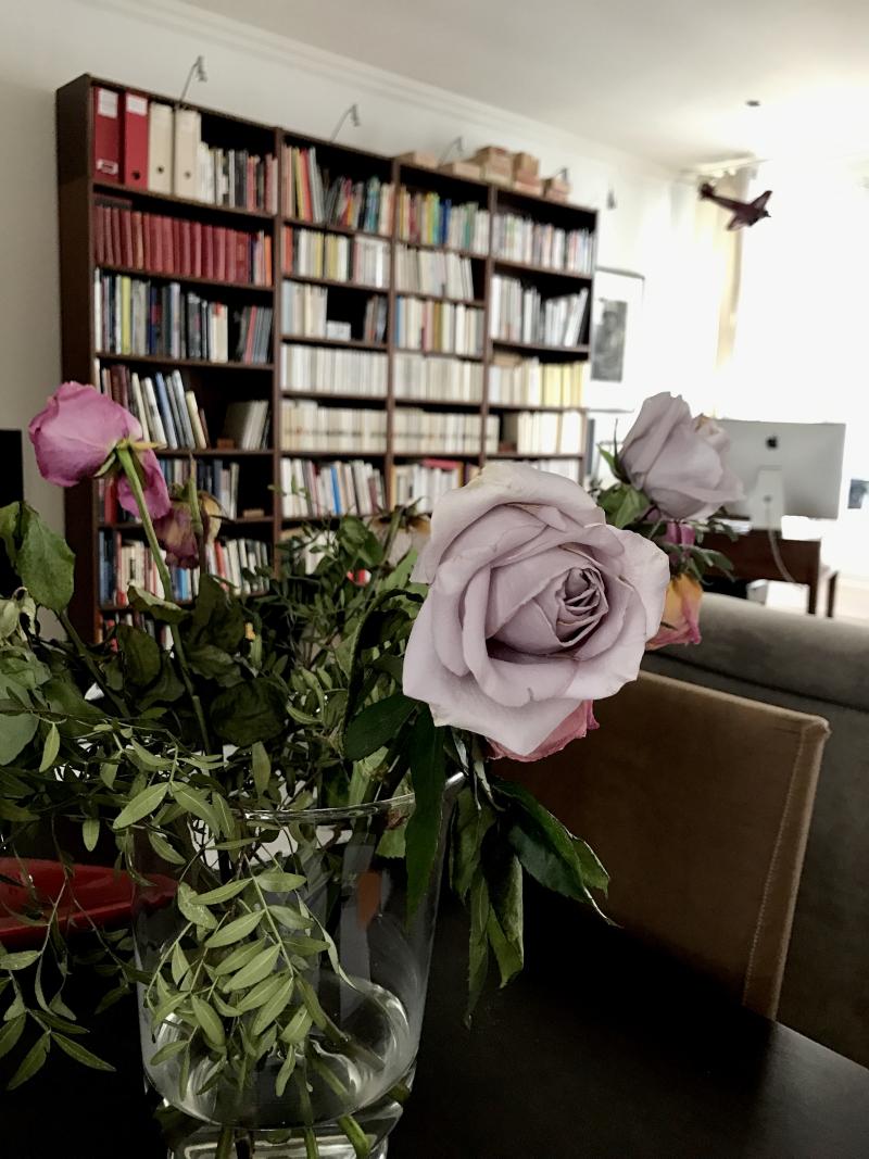 Rose parme